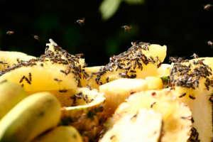 Как избавиться от мошек от фруктов