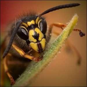 Первая помощь при укусе осы, лечение и профилактика