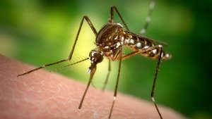 Способы избавления от комаров в домашних условиях