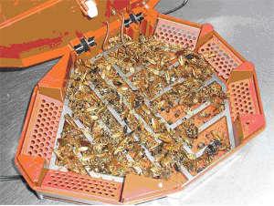 Лучшие эффективные ловушки для тараканов