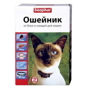 Как правильно выбрать ошейник от блох и клещей для кошек