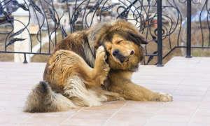 Что делать, если собака чешется и грызет себя — причины и лечение