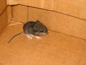 Как в частном доме избавиться от мышей – 8 лучших способов