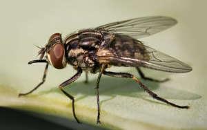 Как избавиться от мух в загородном доме — методы борьбы