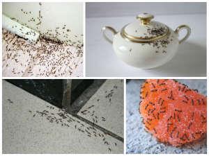 Как избавиться от домашних муравьев в квартире эффективно и быстро
