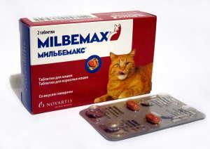 Лучшие средства от глистов для кошек