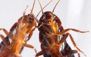 Средство от тараканов в квартире