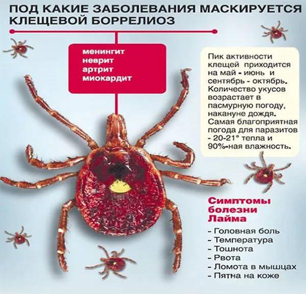 информация о клещевом берролиозе